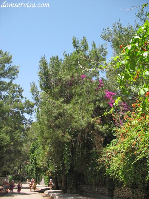 Буйная растительность над дорогой от отеля Kaplan на пляж