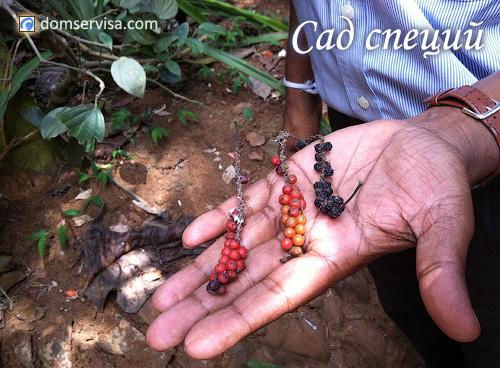 Экскурсия в сад специй в Канди