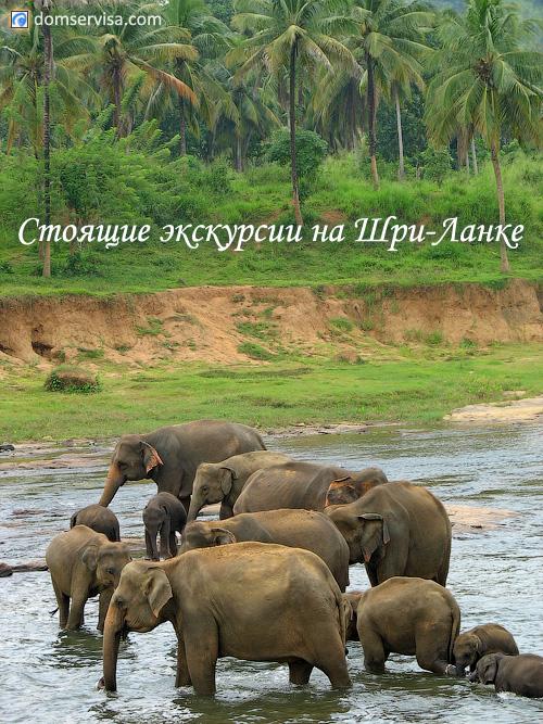 Слоновий питомник: стоящие экскурсии на Шри-Ланке