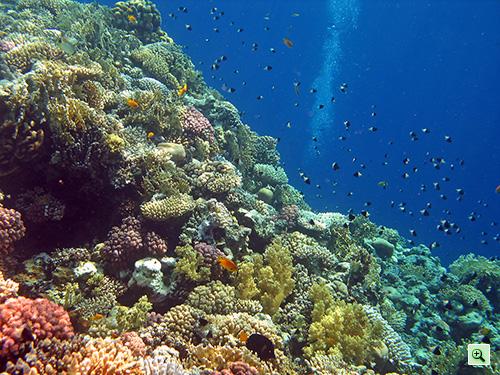 Кораллы и рыбки возле понтона отеля Tiran Island