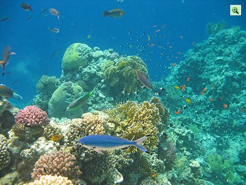 Куча всякой экзотической рыбы в Шарм эль Шейхе