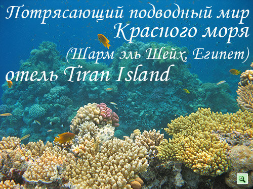 потрясающий подводный мир Красного моря возле отеля Tiran Island Corinthia